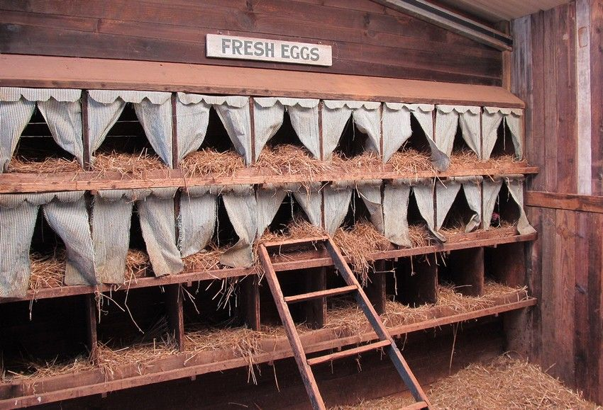 Nest for laying hens with their own hands: photos, sizes, tips